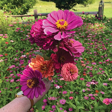 flowers-from-armstrong-garden